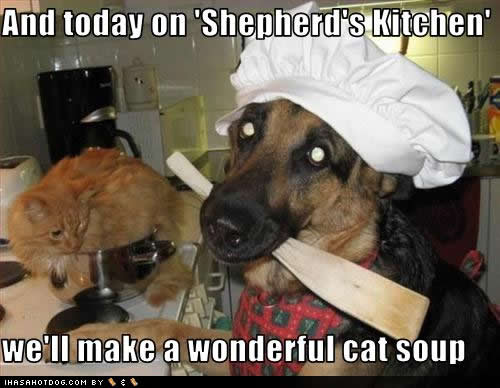 funny-dog-pictures-shepherds-kitchen.jpg