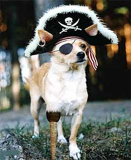 pirate dog.jpg