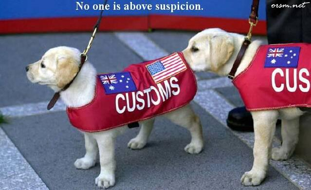 pups customs.jpg